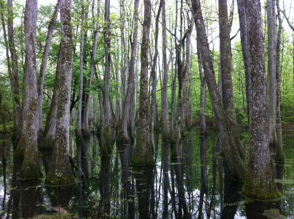 A bayou on the Natchez Trace.